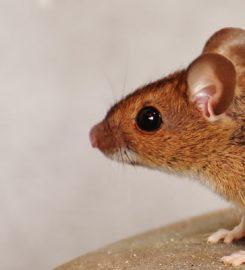 The Exterminator Pest Control